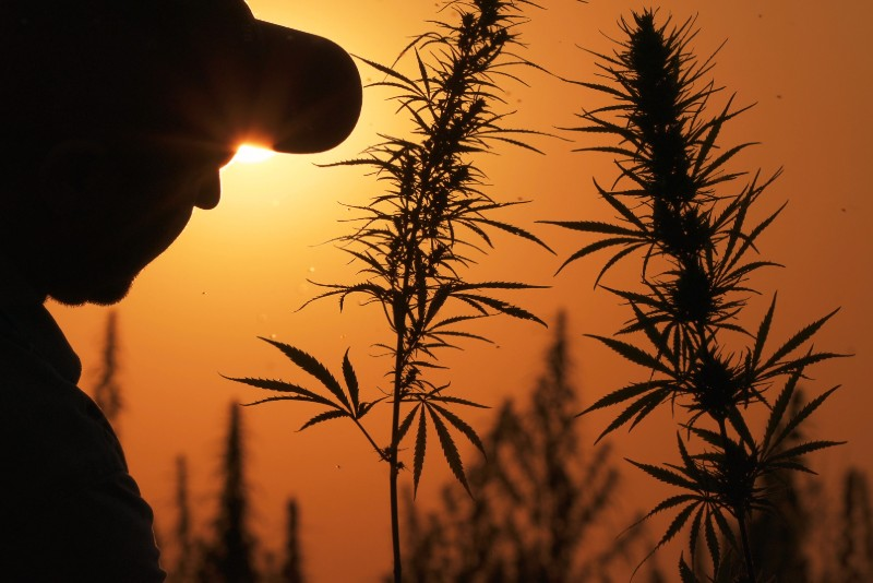CBD Is Creating A Boom For Hemp Farmers
