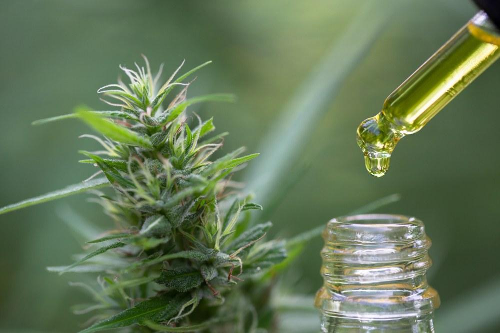CBD oil and cannabis flower