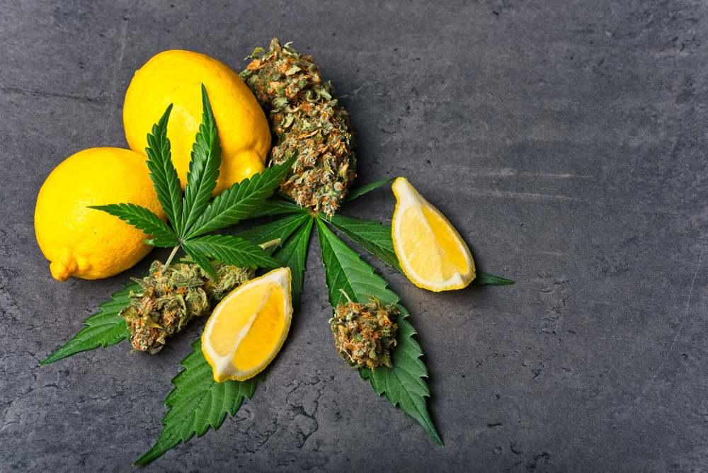 lemon and cannabis