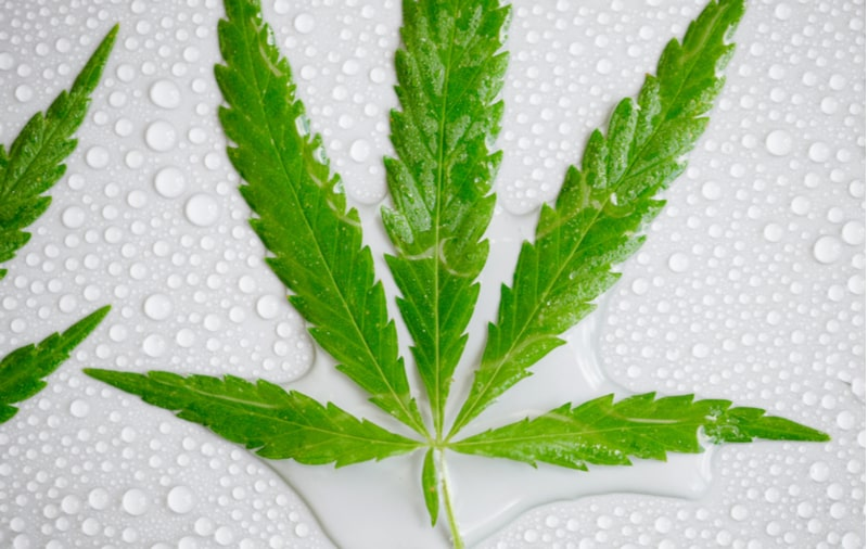 Water Soluble CBD - What you need to Know!